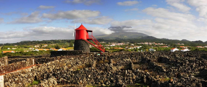 Vignobles plantés dans une terre de lave, encadrés par des murs de pierres sèches appelés « currais », île de Pico