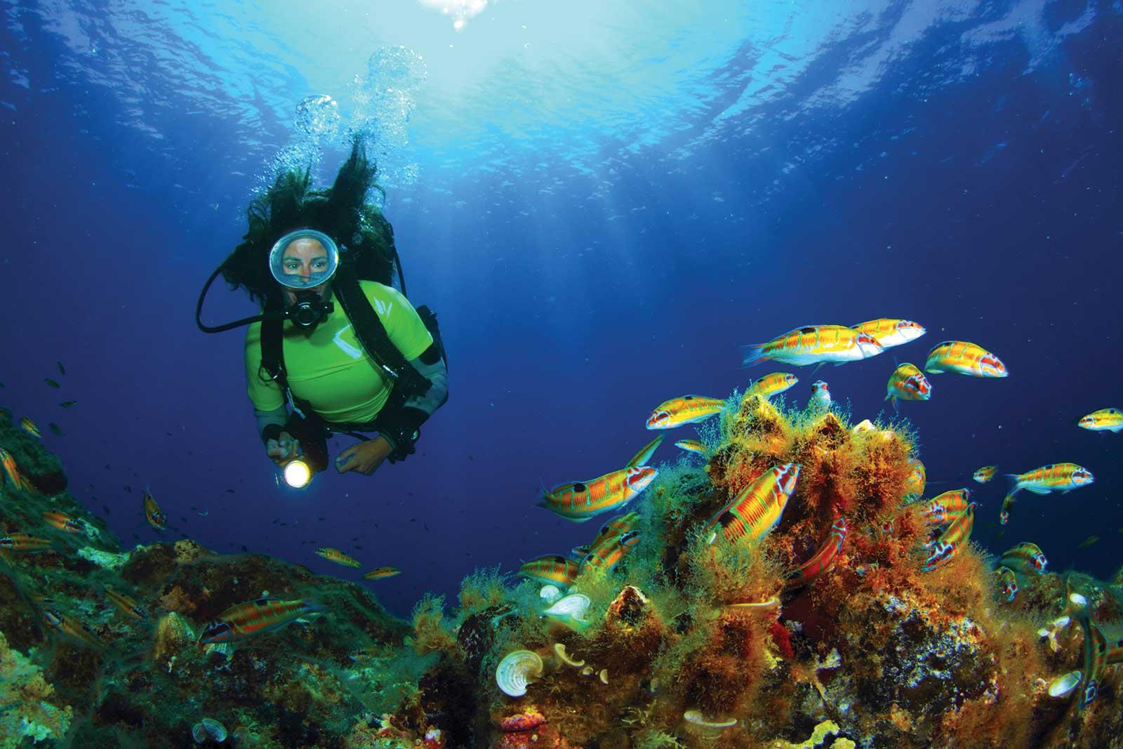 Plongée à Faial aux Açores, dans le royaume des raies mantas, barracudas, thons géants et requin bleu