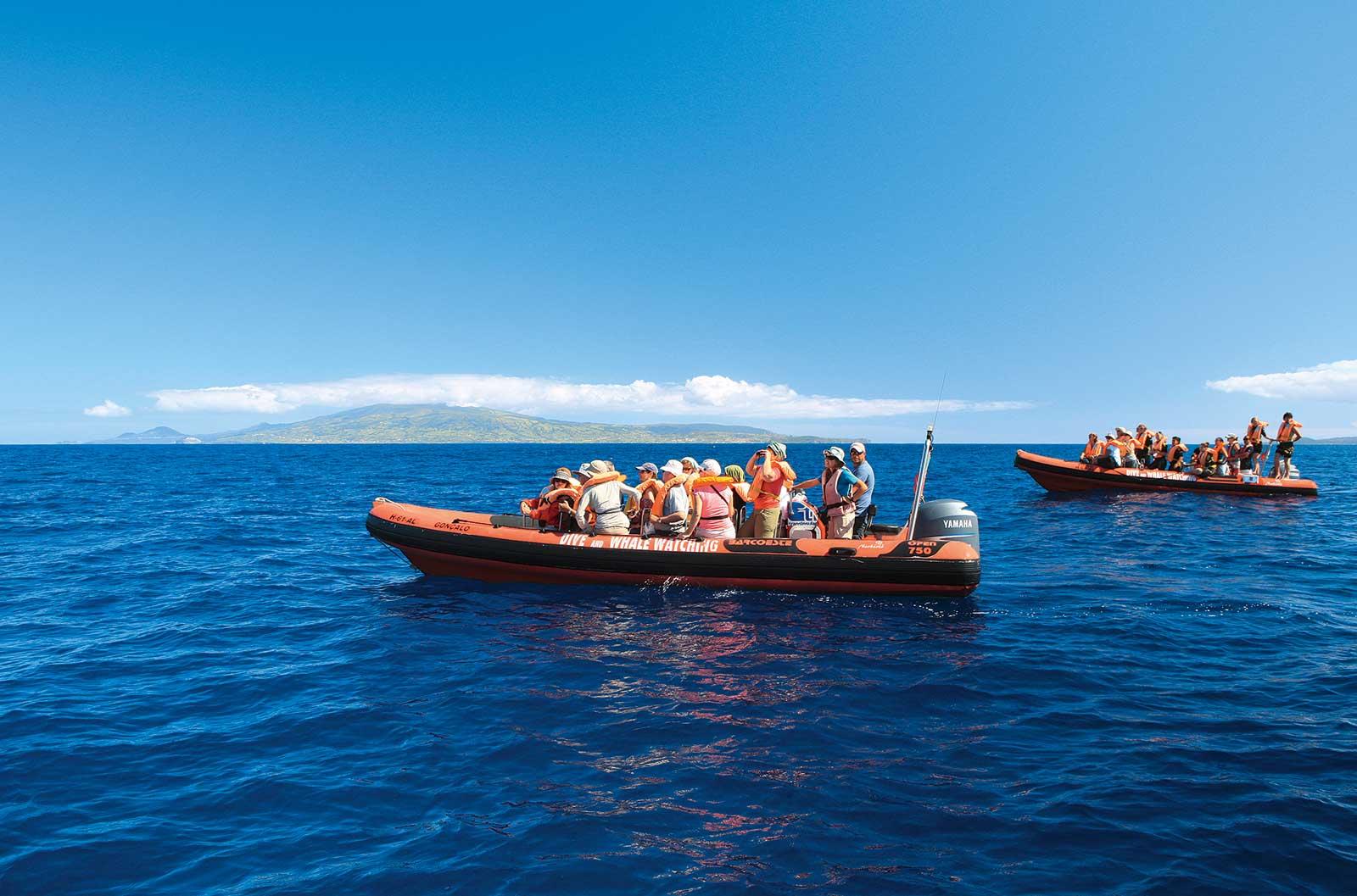 Sortie en mer Espaça Talassa à Pico, 27 espèces de mammifères marins recensées aux Açores